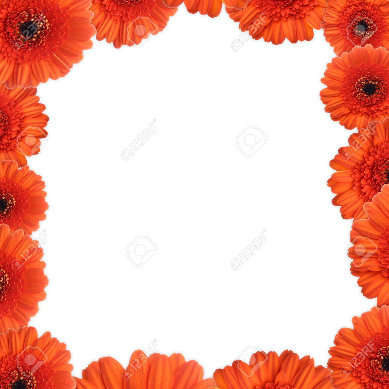 Red gerbera as a picture frame. Picture was made in a studio. Stock Photo - 795677