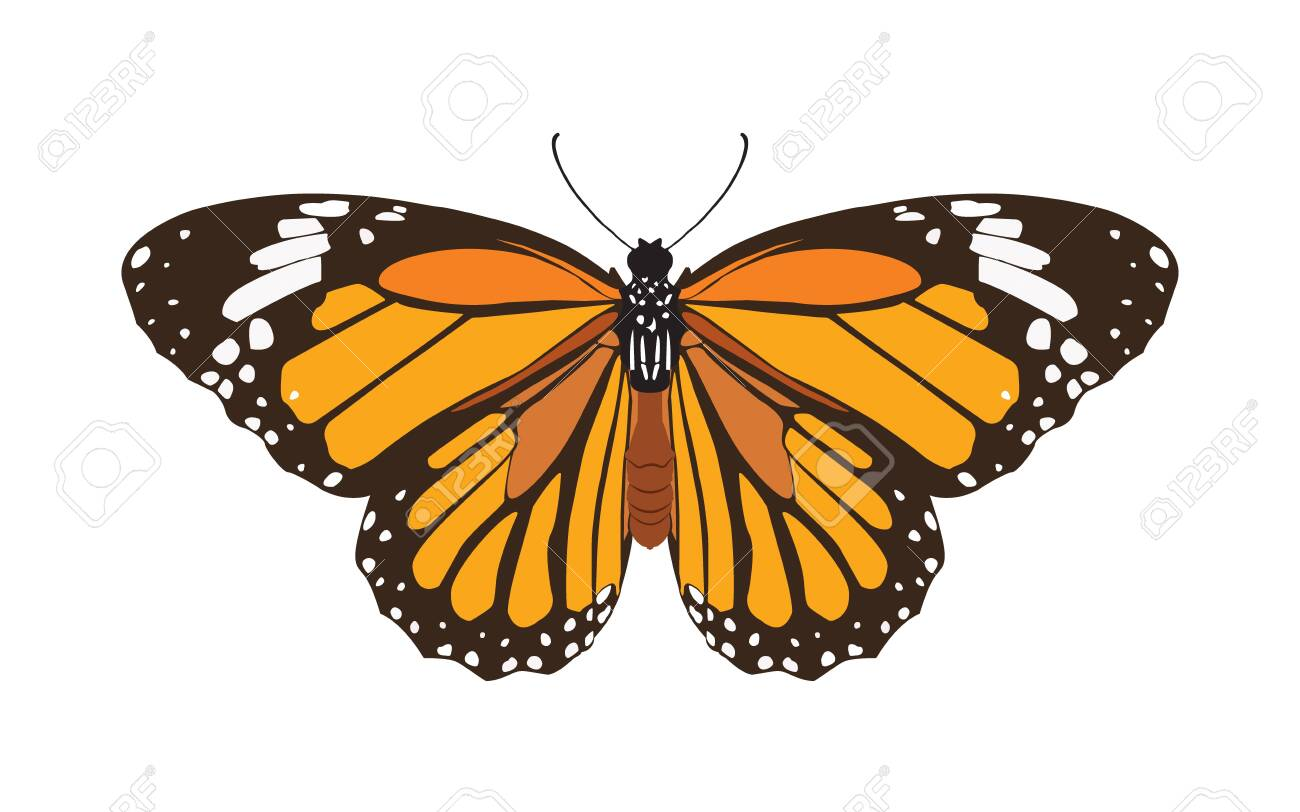 butterfly isolated on white background, insect vector illustration flat style - 147695631