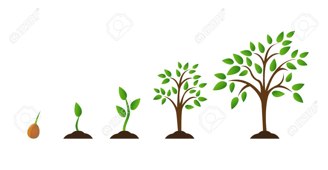 illustration - tree growth diagram with green leaf, nature plant  set of  illustrations with phases plant growth  flat style