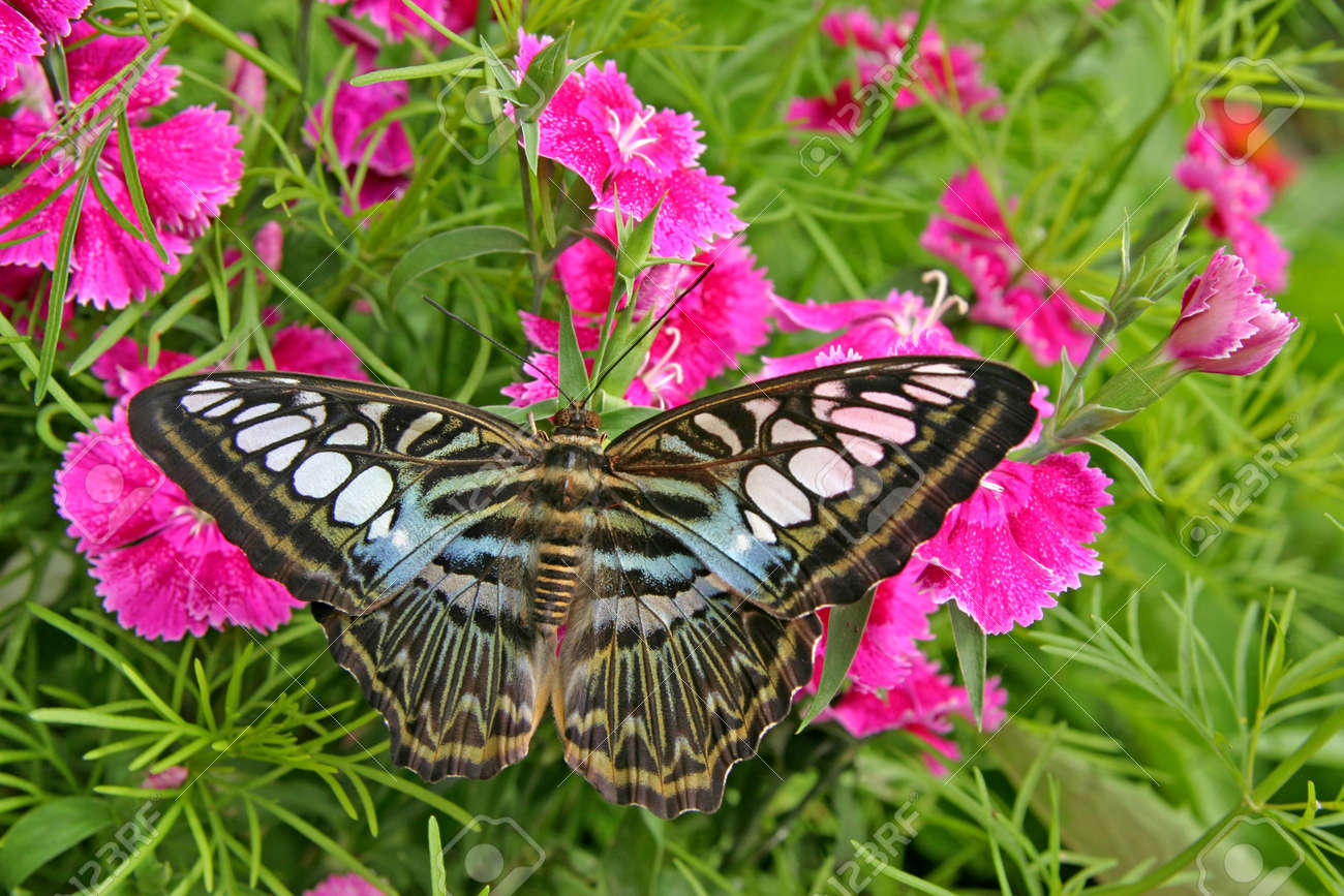 nice black white and blue butterfly on flowers and leaves stock