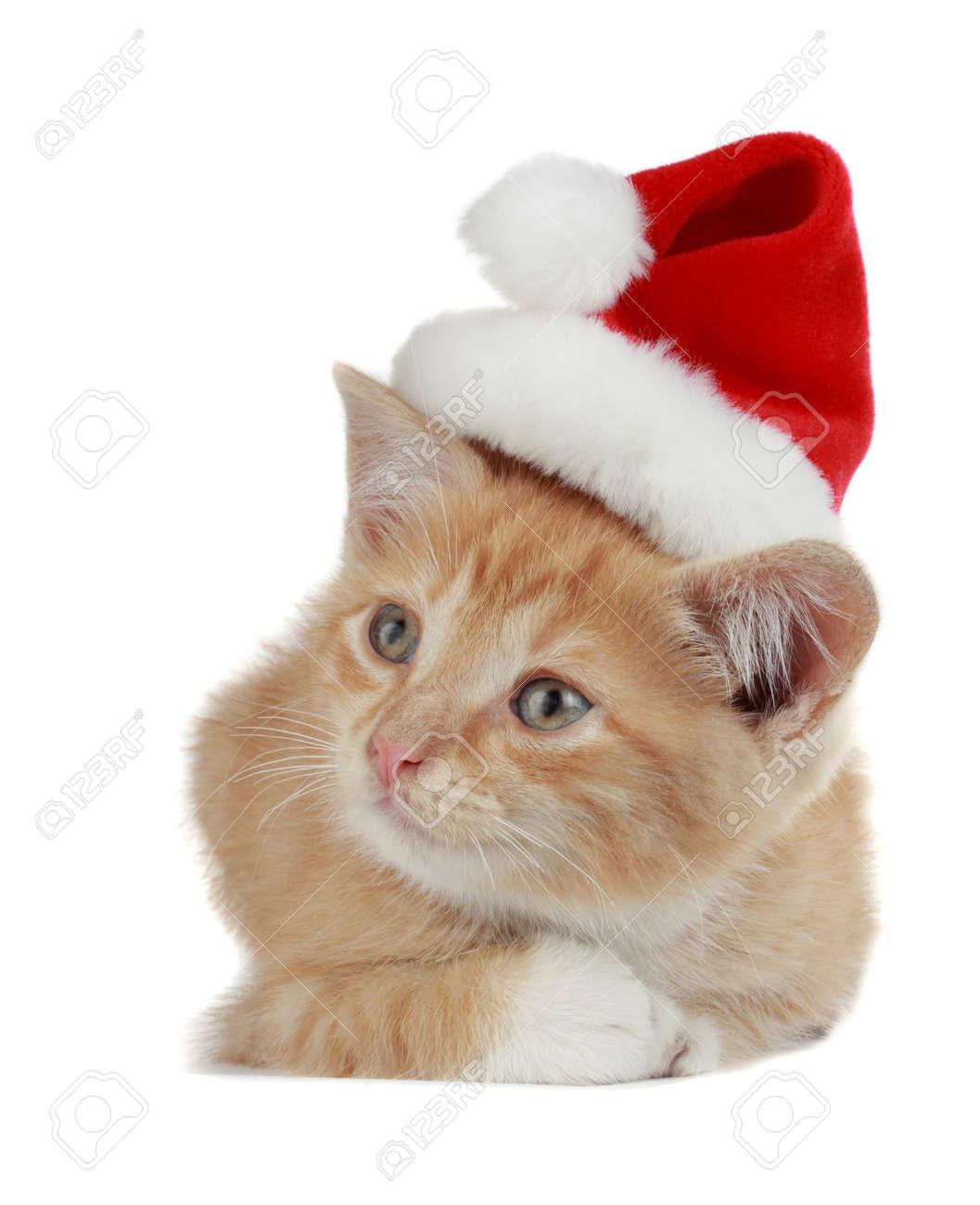 cute kitten wearing christmas hat, white background stock photo