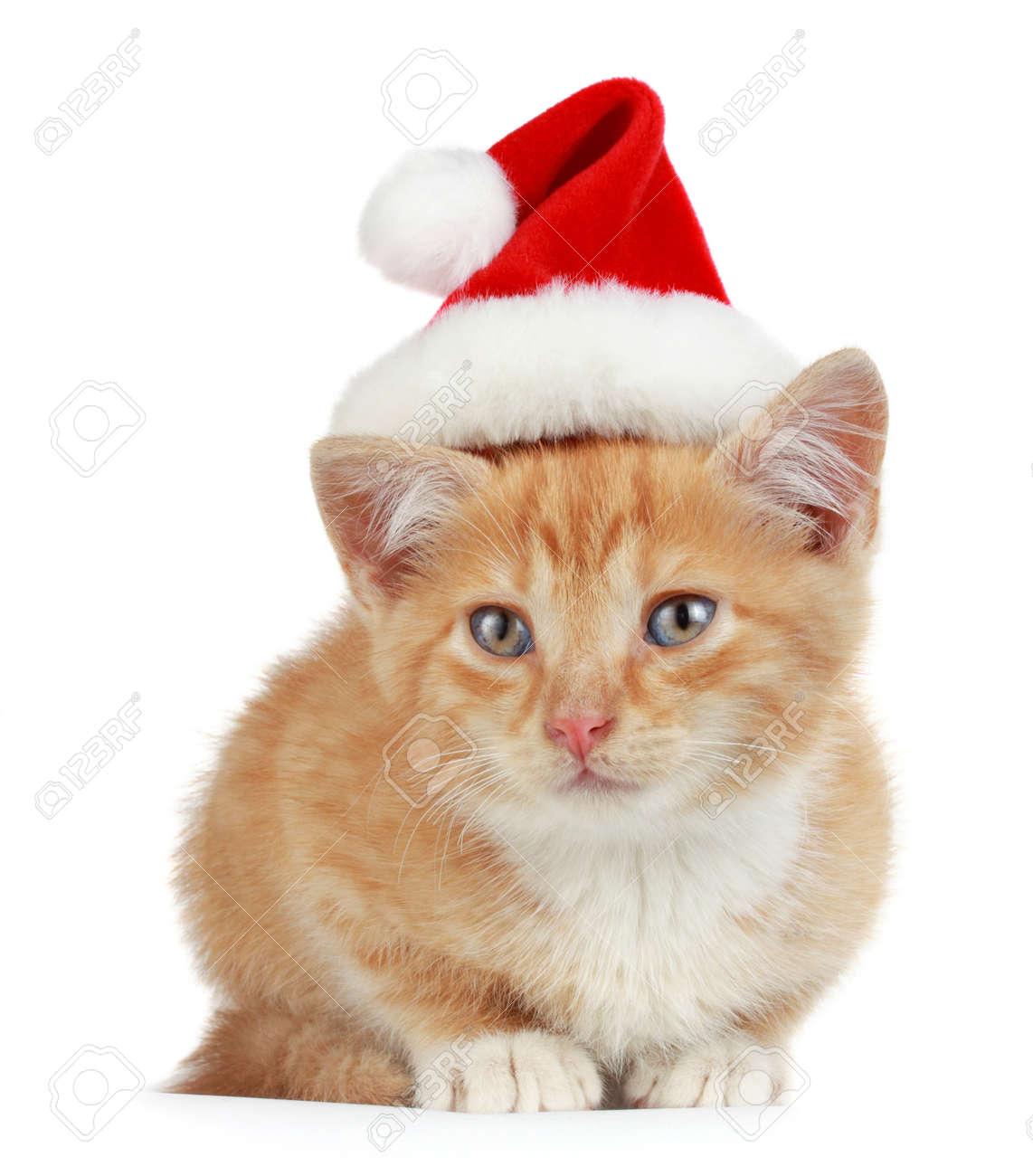 cute little kitten wearing red christmas santa hat, isolated.. stock