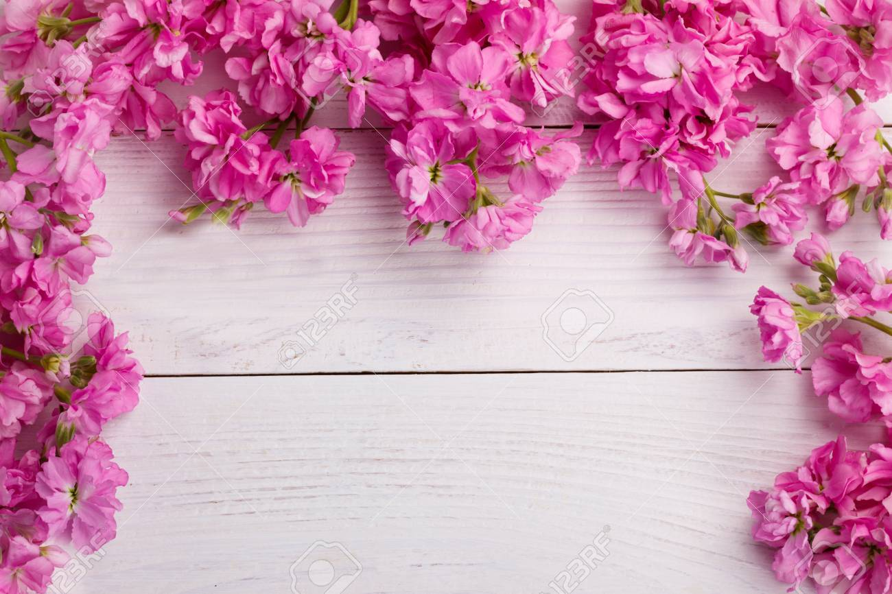 Fragrant Pink Stock Flowers Matthiola Over White Wooden Background