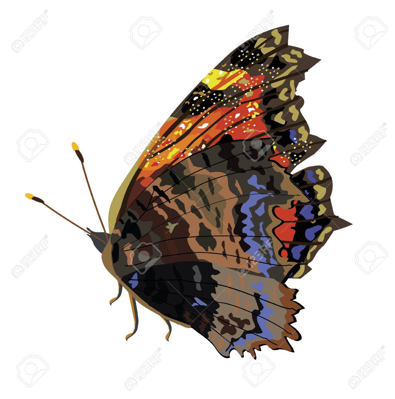 Beautiful isolated dark butterfly Stock Vector - 20957787