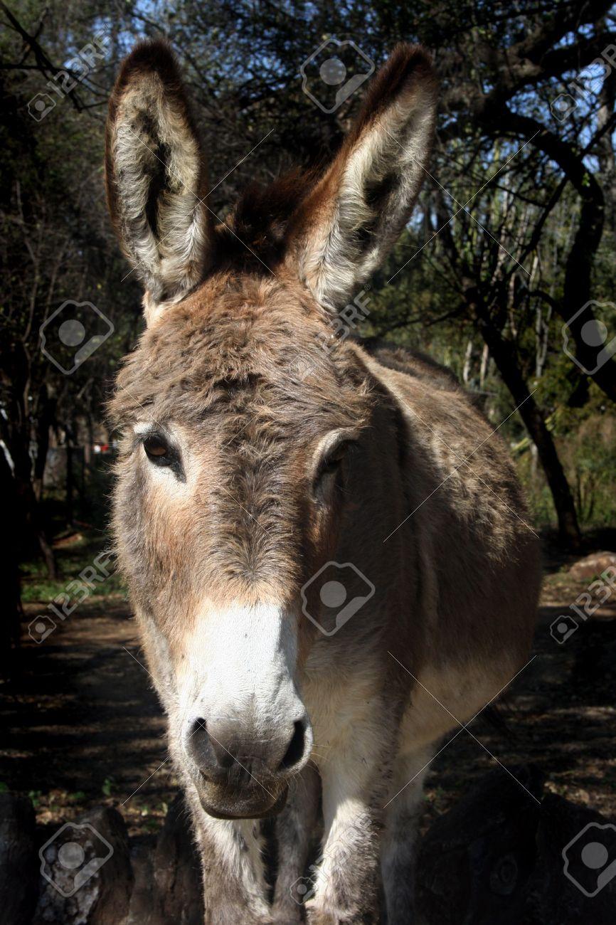 Close up of donkeys face Stock Photo - 3210176