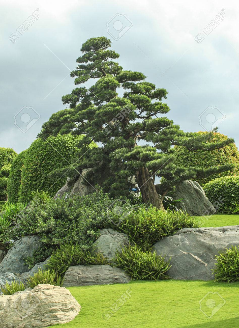 Typical Japanese Garden Pine Trees Lake Stone Grass And
