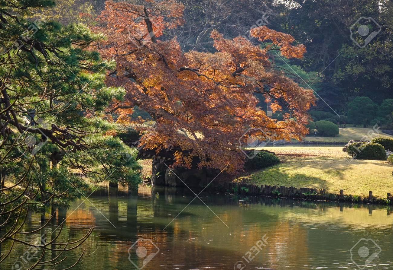Autumn Trees With Lake At Rikugien Gardens In Tokyo, Japan. Rikugien ...