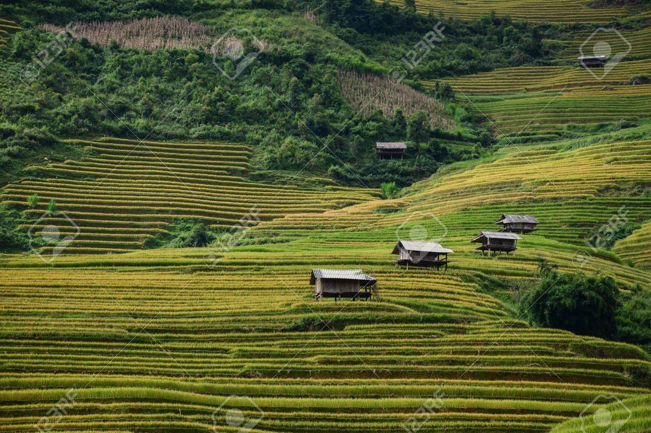 Pequeñas Casas Con Campo De Arroz Aterrazados En Sa Pa Vietnam Septentrional Las Terrazas De Arroz Son Pendientes Reclamadas De La Naturaleza Para