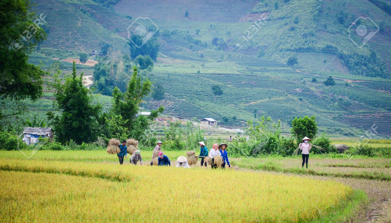 Sapa, Vietnam - May 29, 2016  People working on the rice field