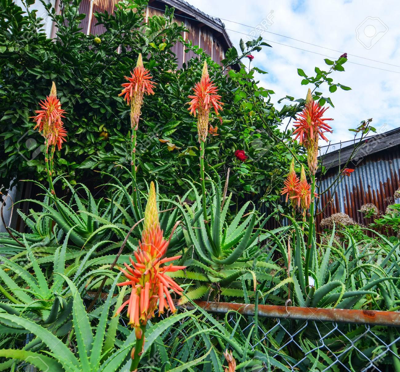 100 Incroyable Suggestions Les Jardins De L Aloe