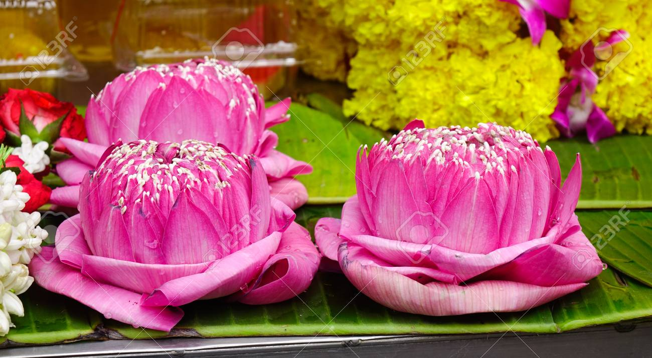 Lotus flowers for sale at hindu temple in bangkok thailand stock lotus flowers for sale at hindu temple in bangkok thailand stock photo 85434889 izmirmasajfo