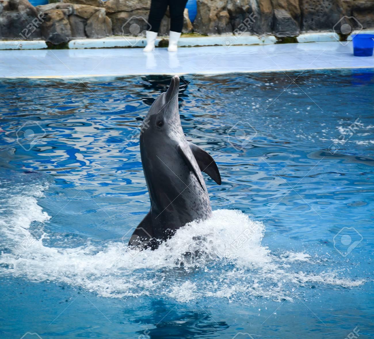 Un Delfín Está Listo Para Impresionar A La Audiencia Con Un ...