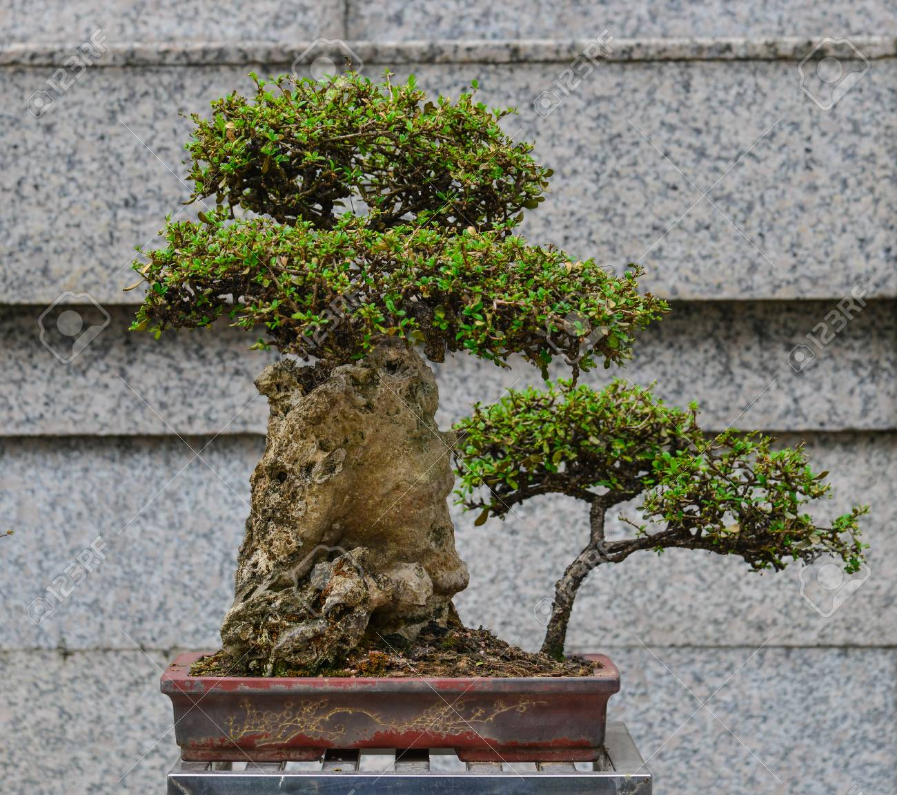 Bonsai Tree At The Zen Garden Of Public Park In Hong Kong Stock Photo Picture And Royalty Free Image Image 87869939