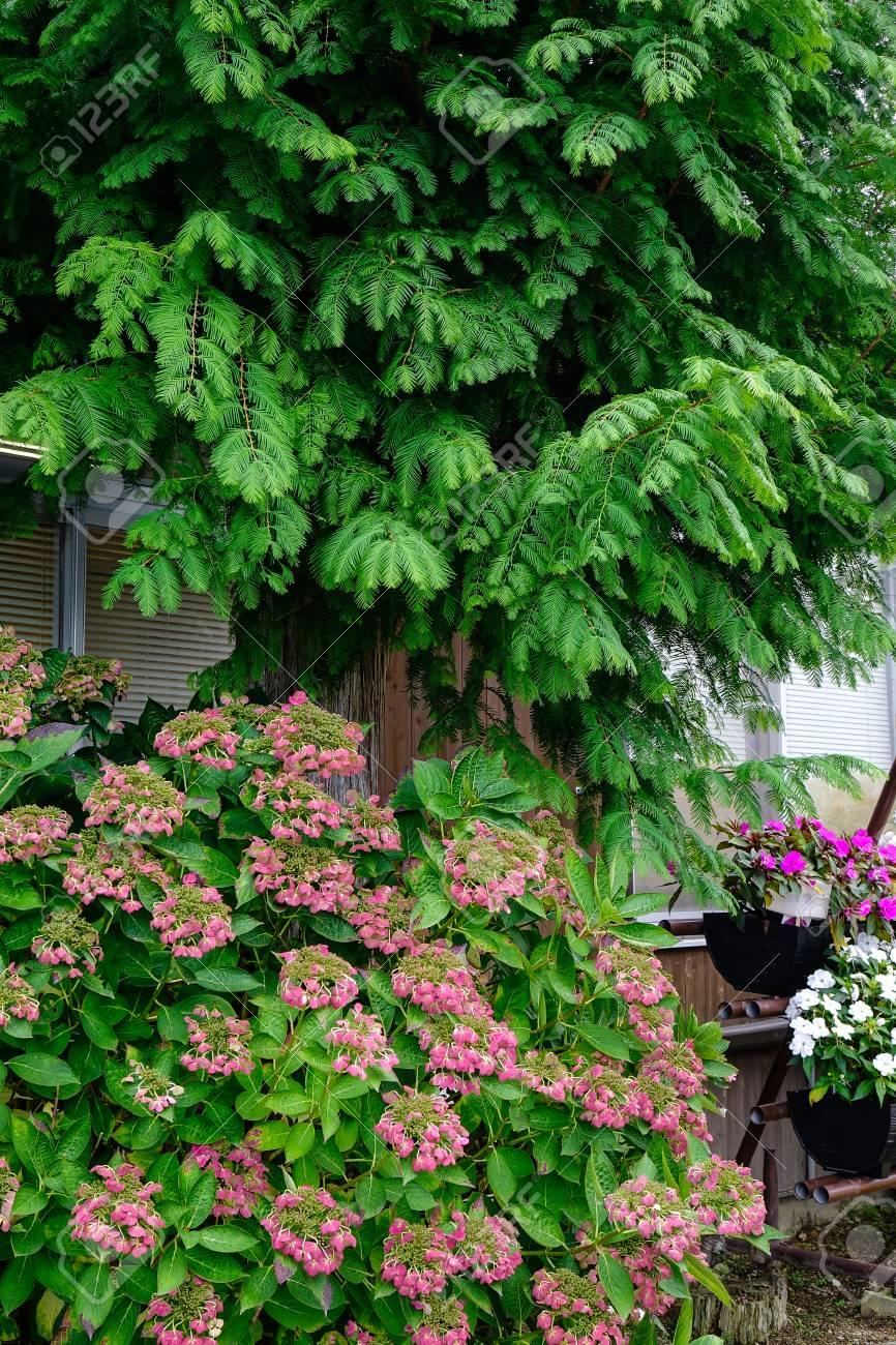 Kleiner Japanischer Garten Mit Kiefer Und Zeit Der Blumen Im ...