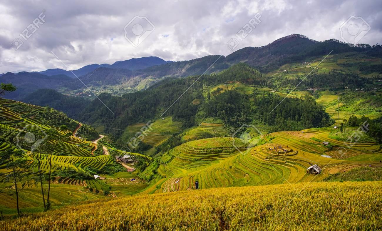 ベトナム北部マイチャウの夏の日に棚田。 の写真素材・画像素材 Image ...