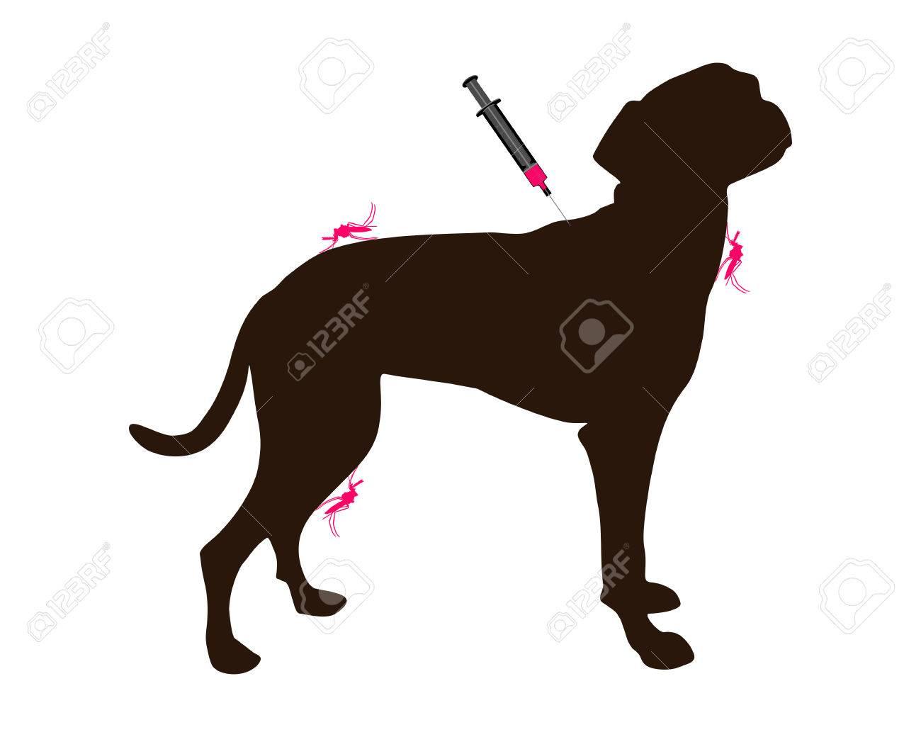 Mosquito Bites on Dogs Disease of Mosquito Bites
