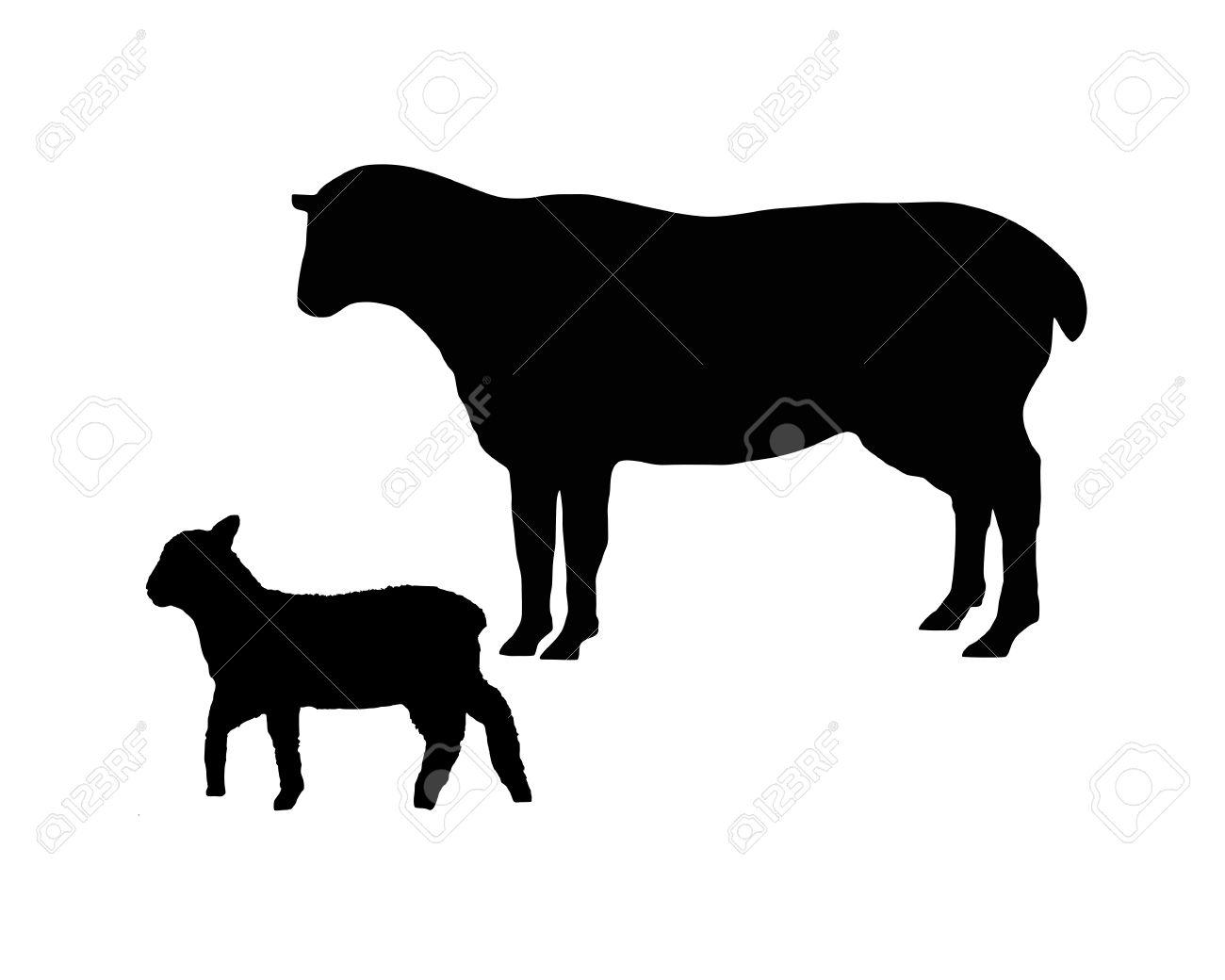 black sheep images u0026 stock pictures royalty free black sheep