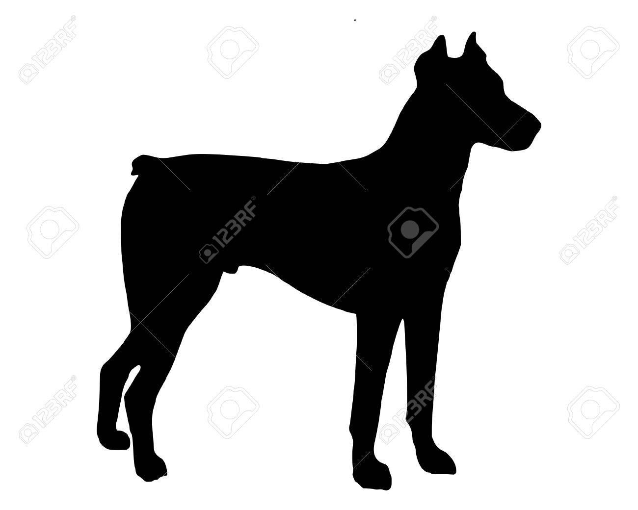 The black silhouette of a Doberman Pinscher Stock Vector - 5850484
