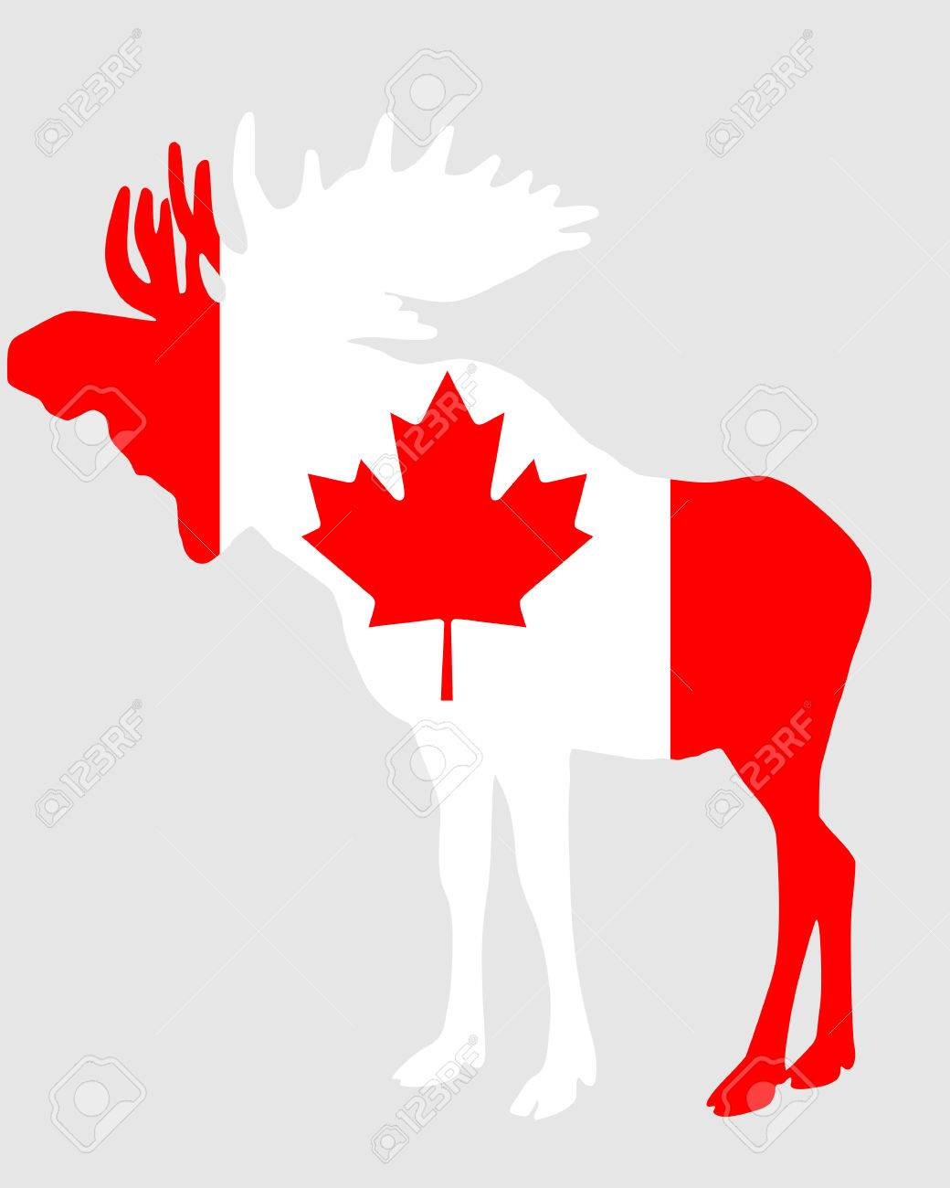 canadian moose images u0026 stock pictures royalty free canadian