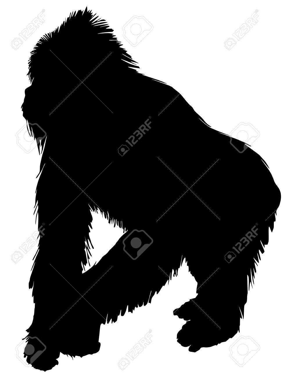 Gorilla silhouette  mo...