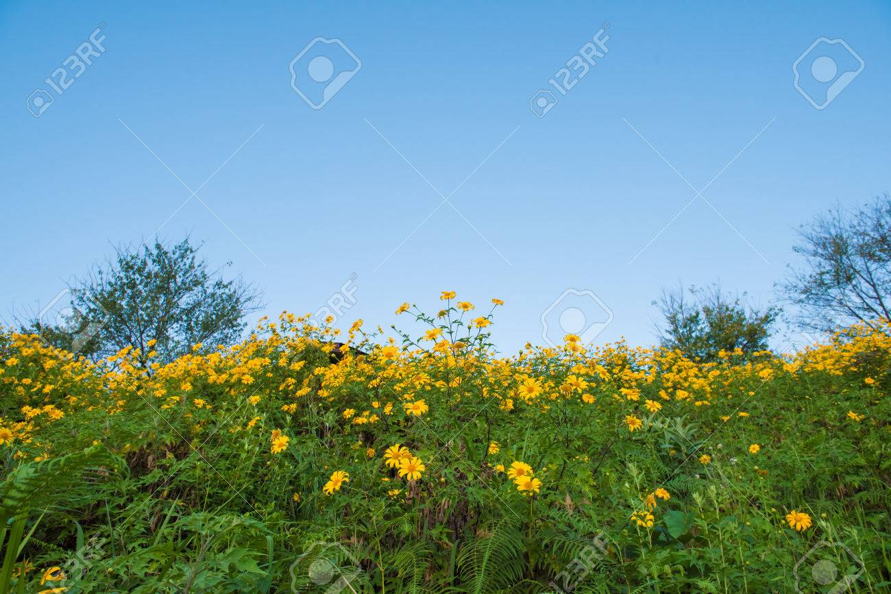 Yellow Mountain Flower Stock Photo Picture And Royalty Free Image