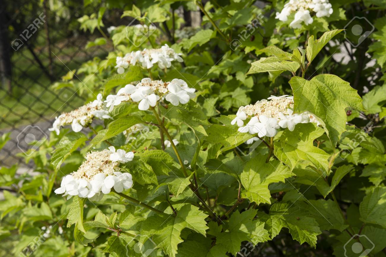 White flowers and ornamental bushes on a green stock photo picture stock photo white flowers and ornamental bushes on a green mightylinksfo