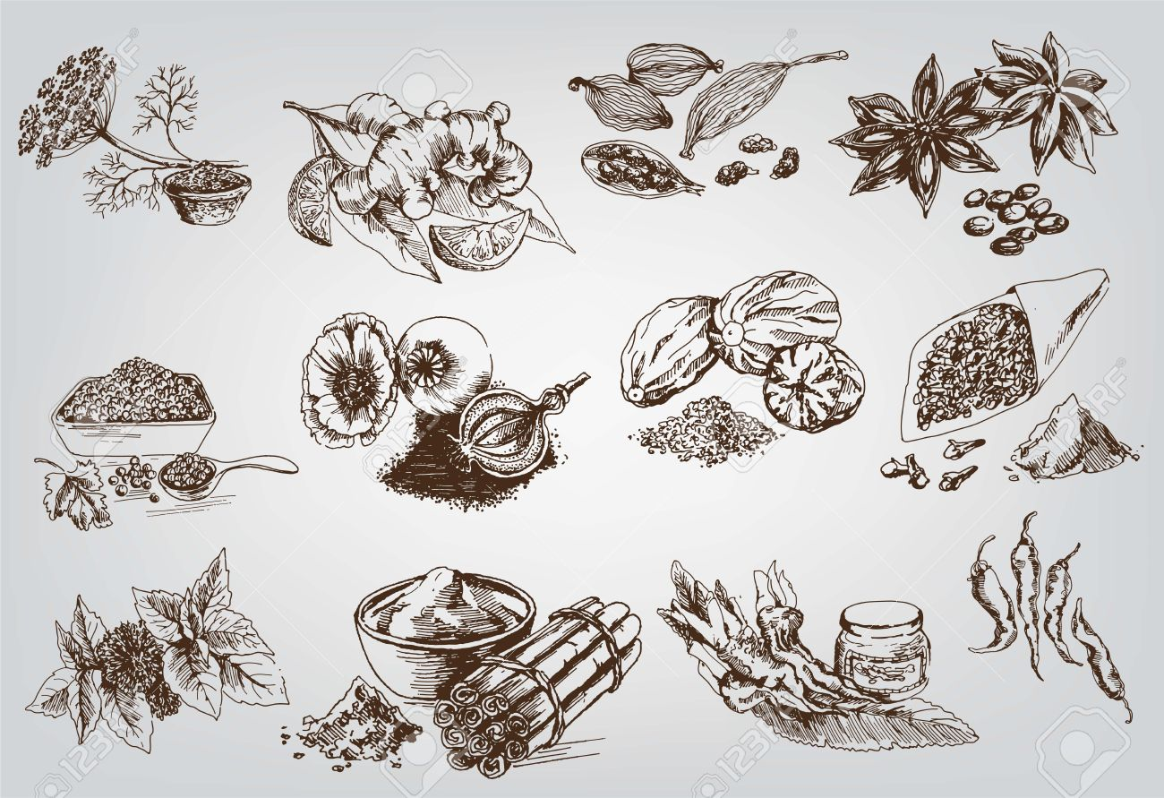 natural spices compilation of vector sketches - 25438243