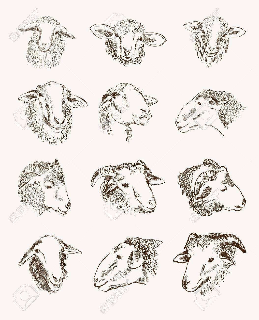 head of farm animals set vector sketches - 26916628