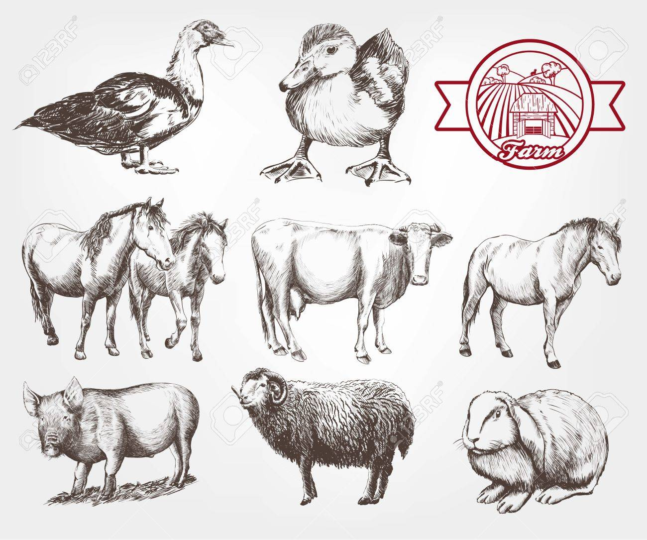 Farm Animals. Set Of Vector Sketches On A White Background Royalty ... for Animal Farm Sketch  183qdu