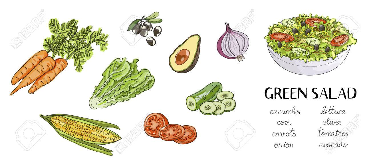 Illustration Of Hand Drawn Green Salad Ingredients Bowl Of Salad Royalty Free Cliparts Vectors And Stock Illustration Image 81881794