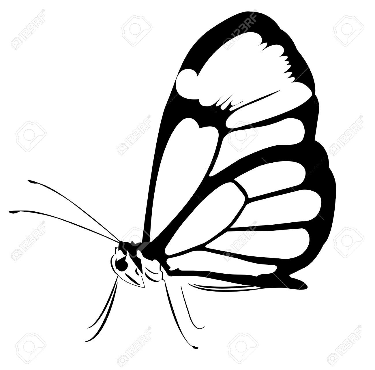 A huge black and white butterfly Stock Vector - 13910421