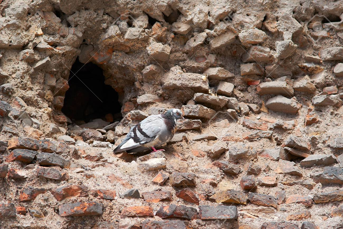 The Roman ruins and dove of atichnye iselliptical in Rome, Italy. Stock Photo - 15056460