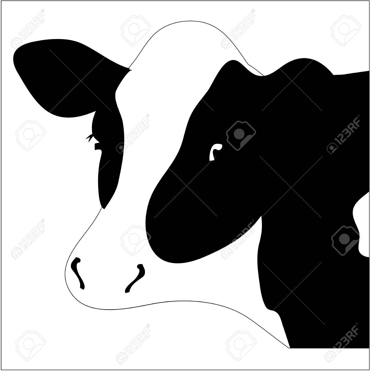 Portrait big black and white cow Stock Vector - 16386329