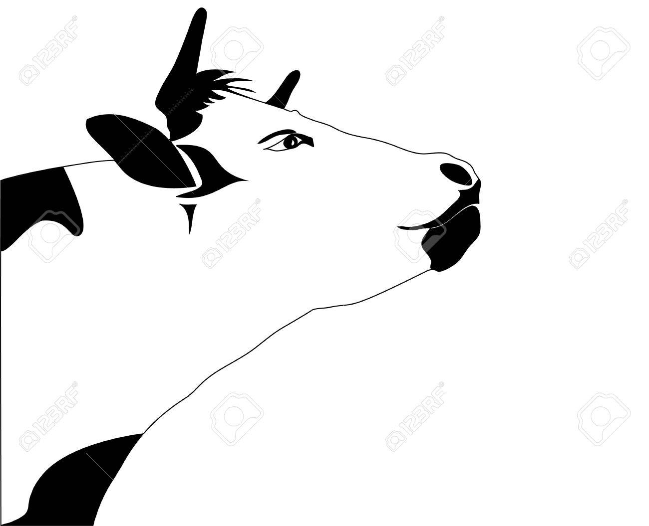 portrait big black and white cow vector royalty free cliparts