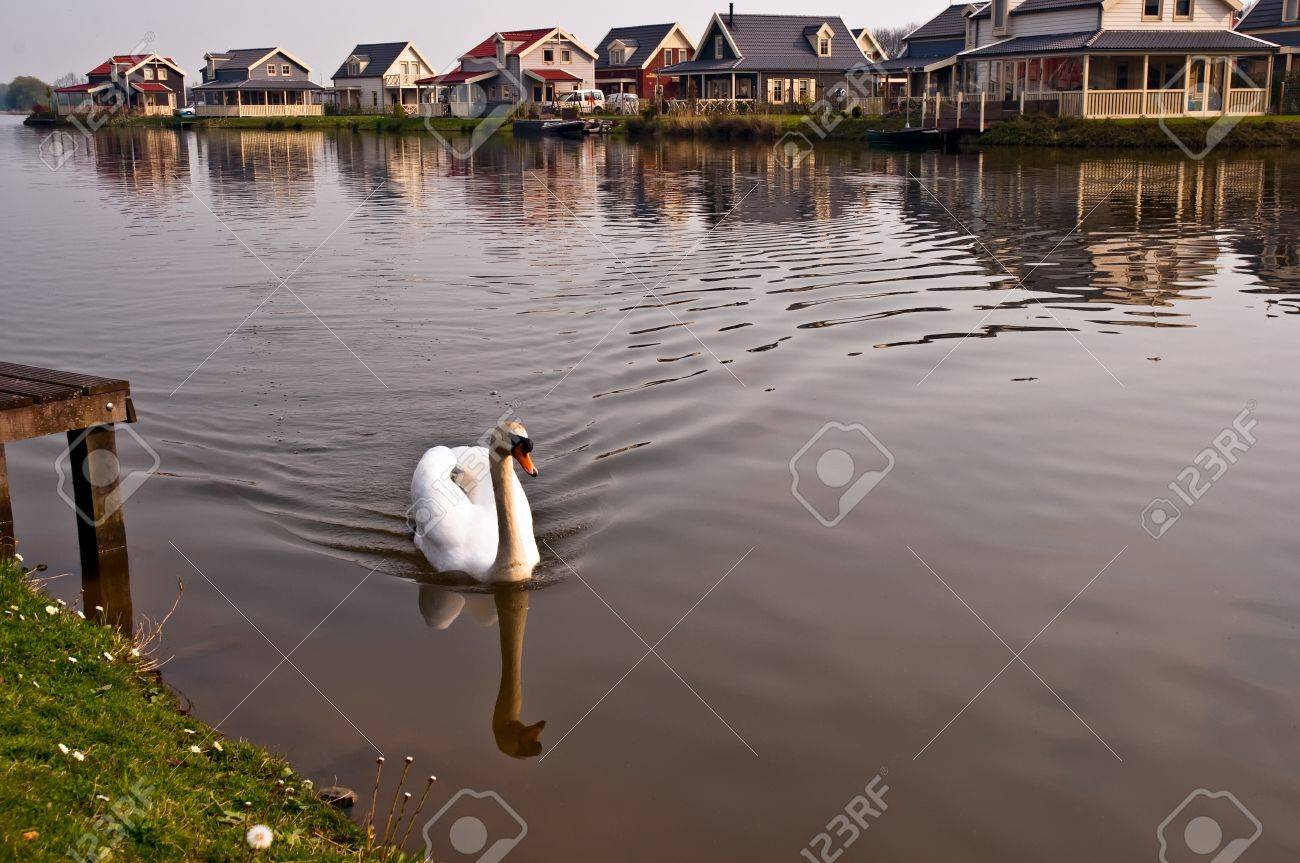 Swan floating on the canal in a Dutch village., Netherlands (Holland). Stock Photo - 9563460