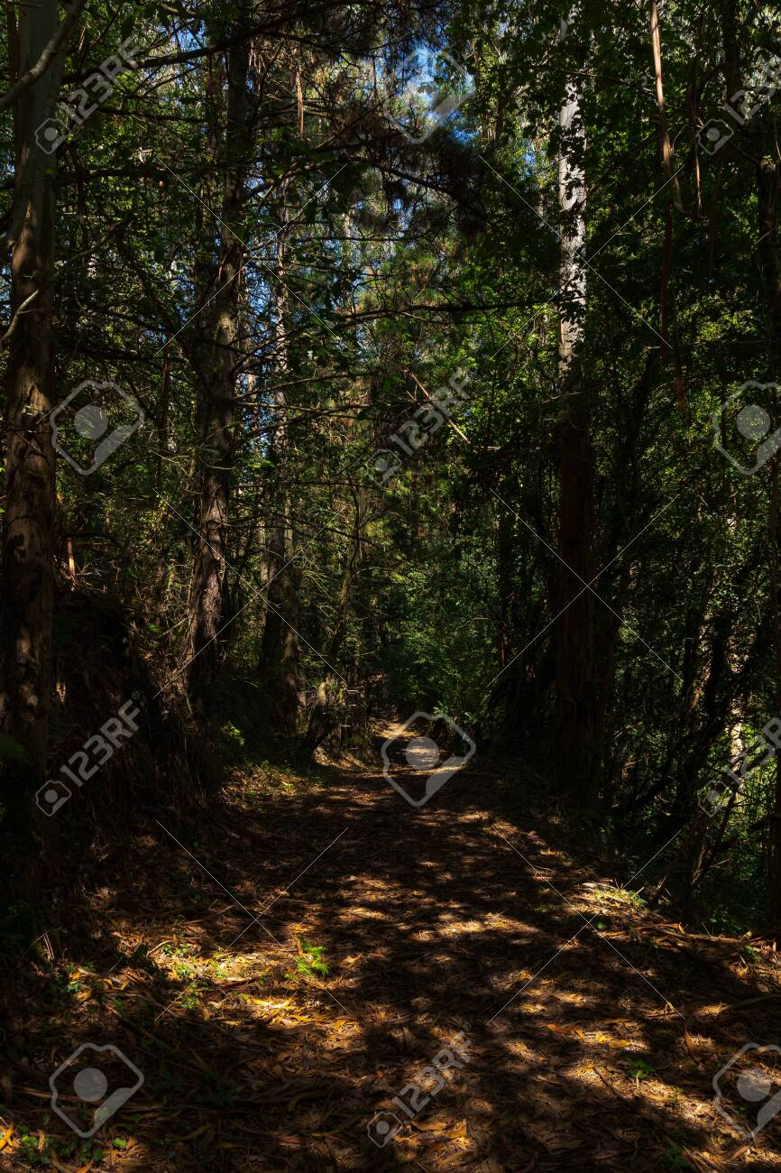 forest in the north of spain - 131892932