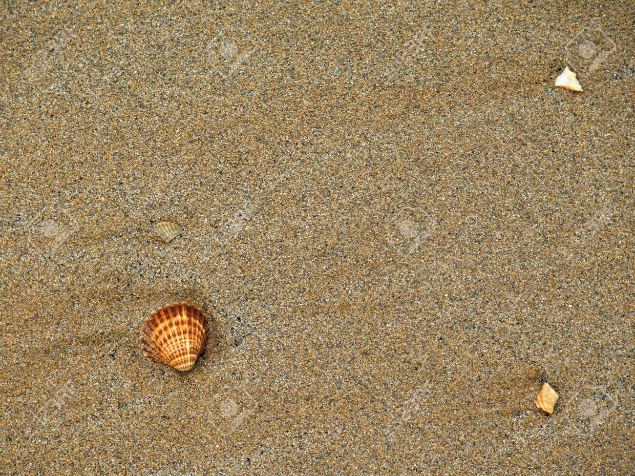 the shells in the sand - 135131914