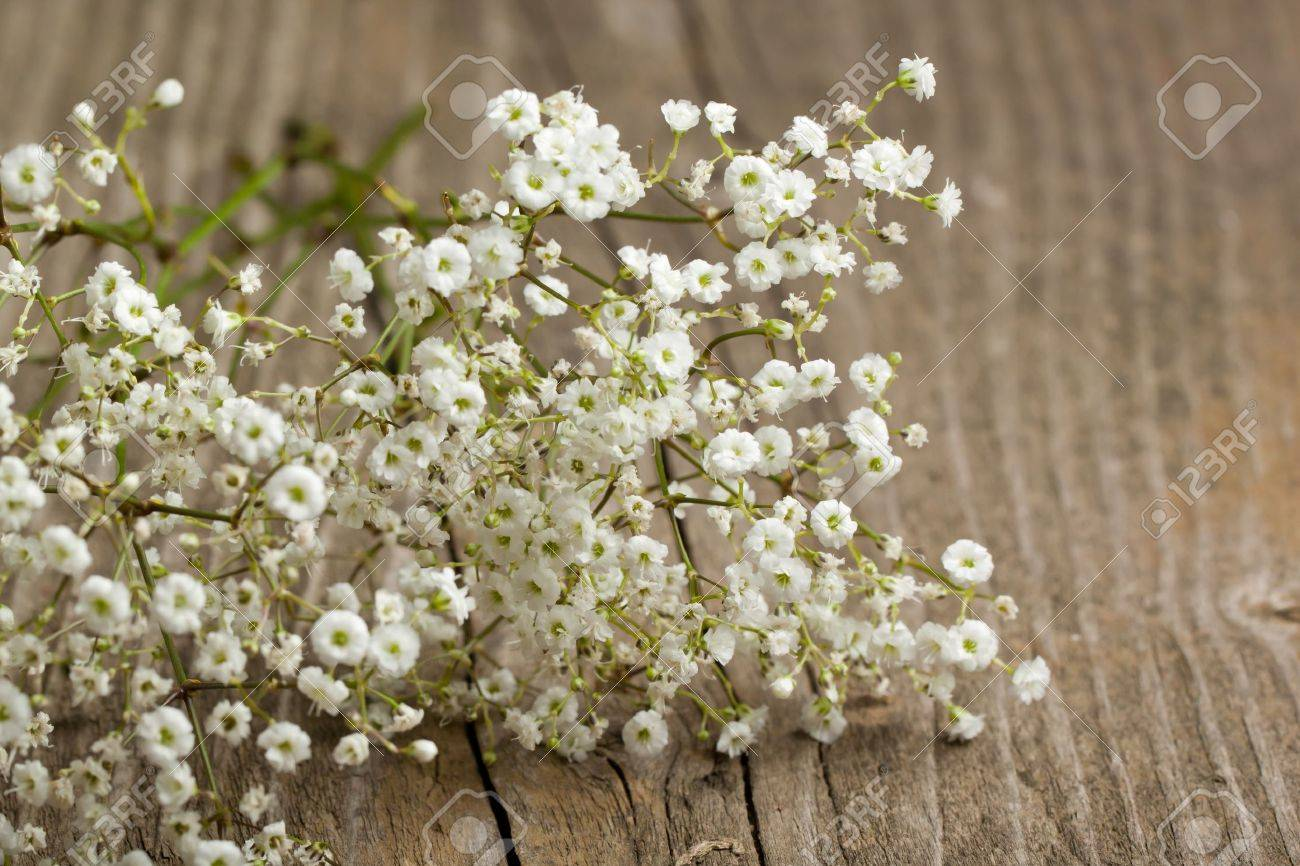 bunch of Gypsophila (Baby's-breath flowers) on old wooden table - 9509393