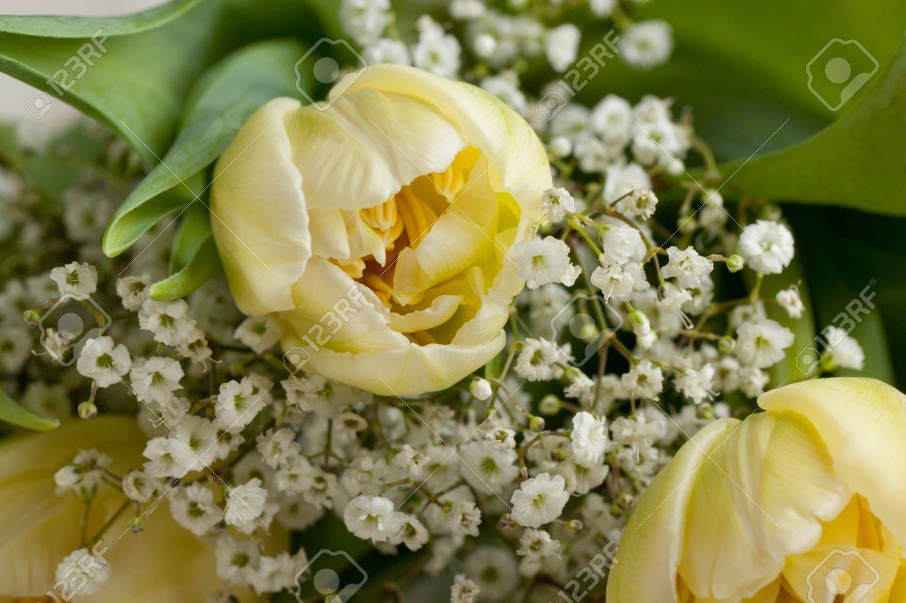 Bouquet Of Yellow Tulips And Little White Flowers Stock Photo ...