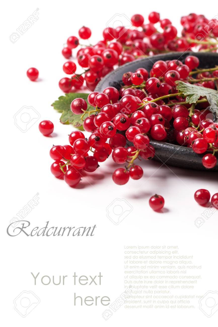 Heap of fresh currant over white with sample text - 21852037