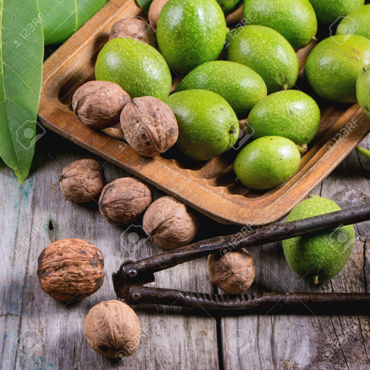 Young green and ripe walnuts in wooden plate and vintage nutcracker over wooden background. Square image with selective focus - 51951693