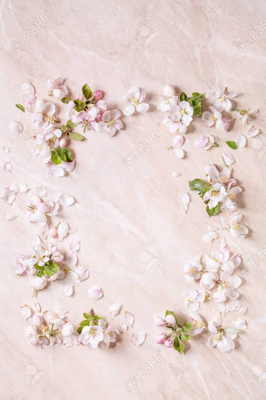 Flat Lay Of Spring Apple Blooming Flowers And Petals As Border Stock Photo Picture And Royalty Free Image Image 147447421