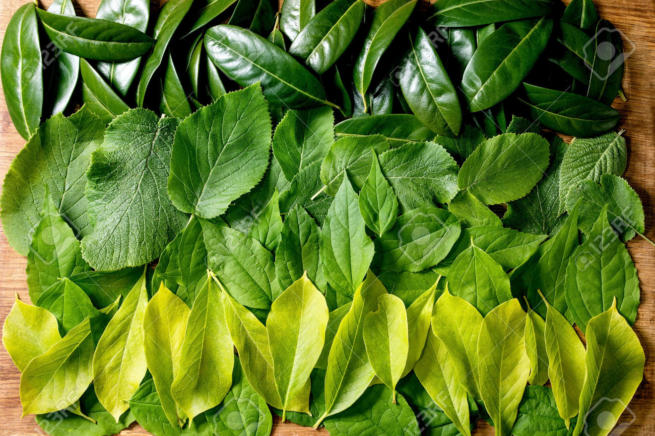 Background made of different green leaves in row, green yellow gradient. Copy space. Nature creative layout, Top view, flat lay. Green life concept - 171158792