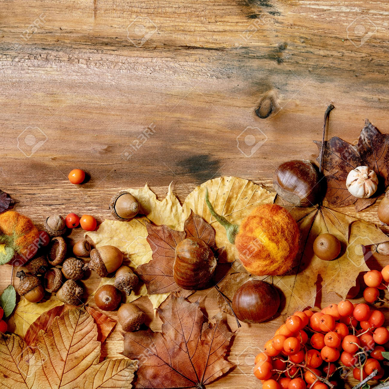 Autumn fall seasonal composition with yellow maple leaves, rowan berries, chestnuts and decorative pumpkins over wooden texture background. Flat lay, copy space. Square - 173053245