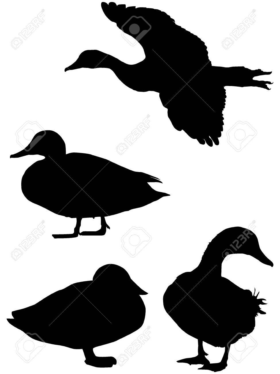 silhouette of a duck royalty free cliparts vectors and stock