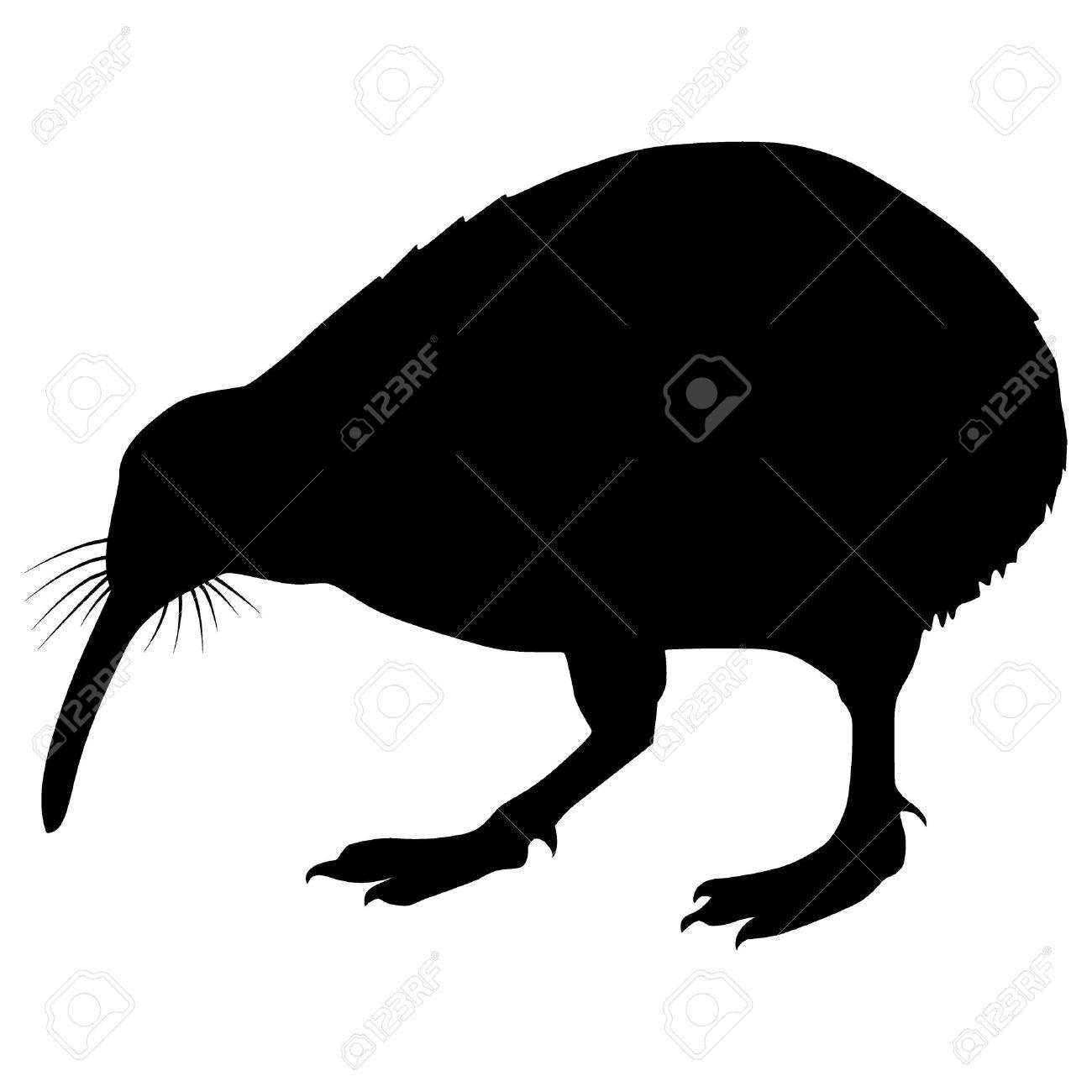 Kiwi Cartoon Drawing Silhouette of a Bird Kiwi