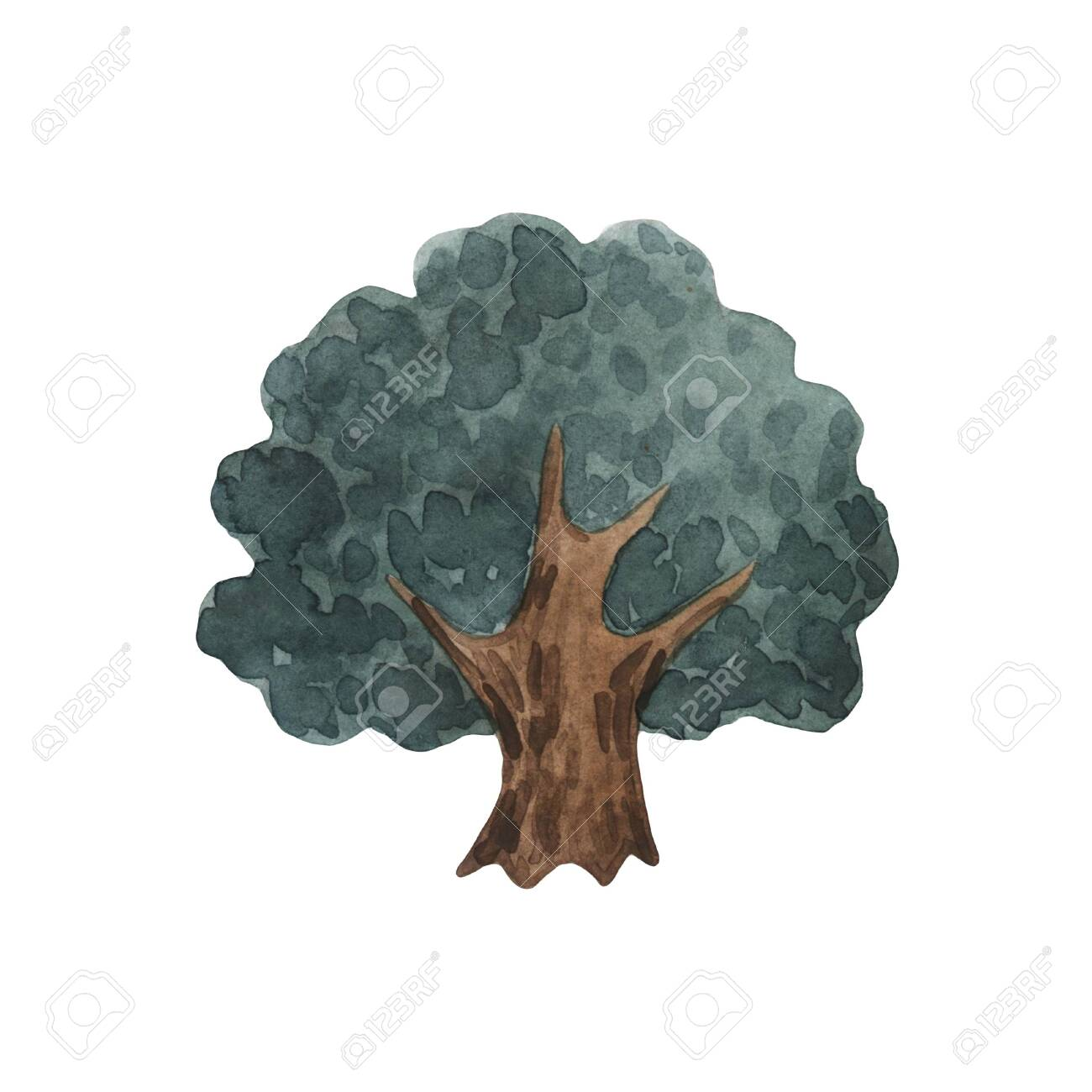 Watercolor Trees Forest Pine Blue Spruce Oak Landscape Stock Photo Picture And Royalty Free Image Image 150101314