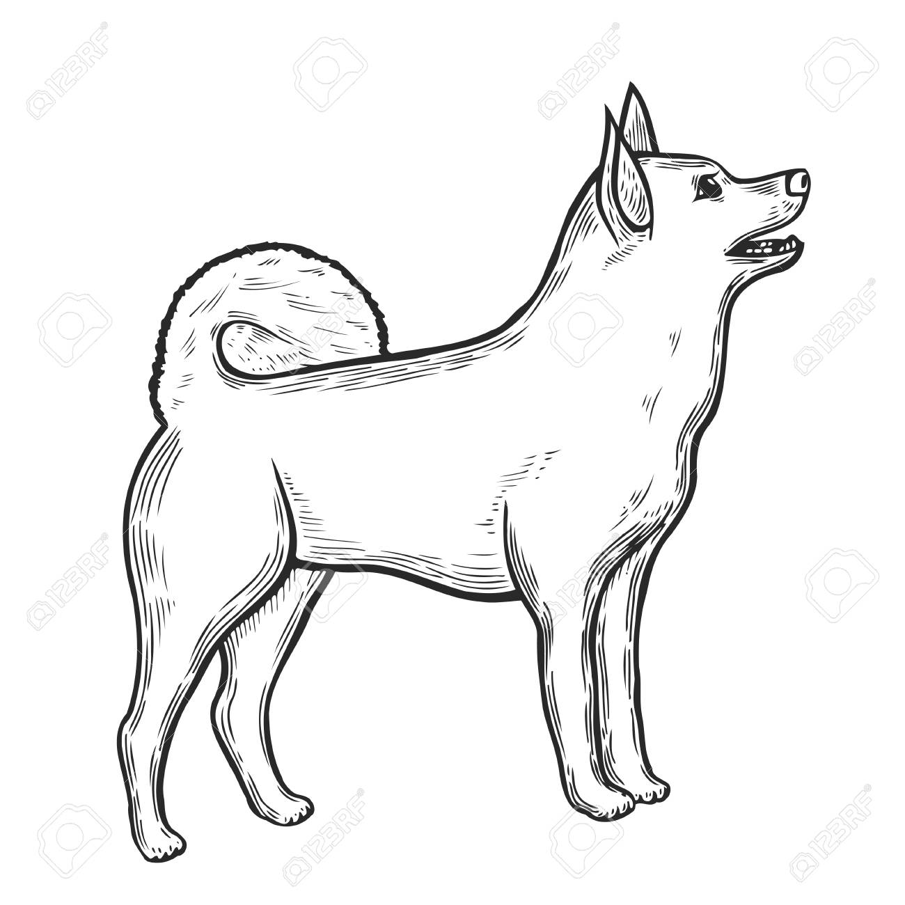 Vector Hand Drawn Illustration With Siberian Husky Eskimo Dog