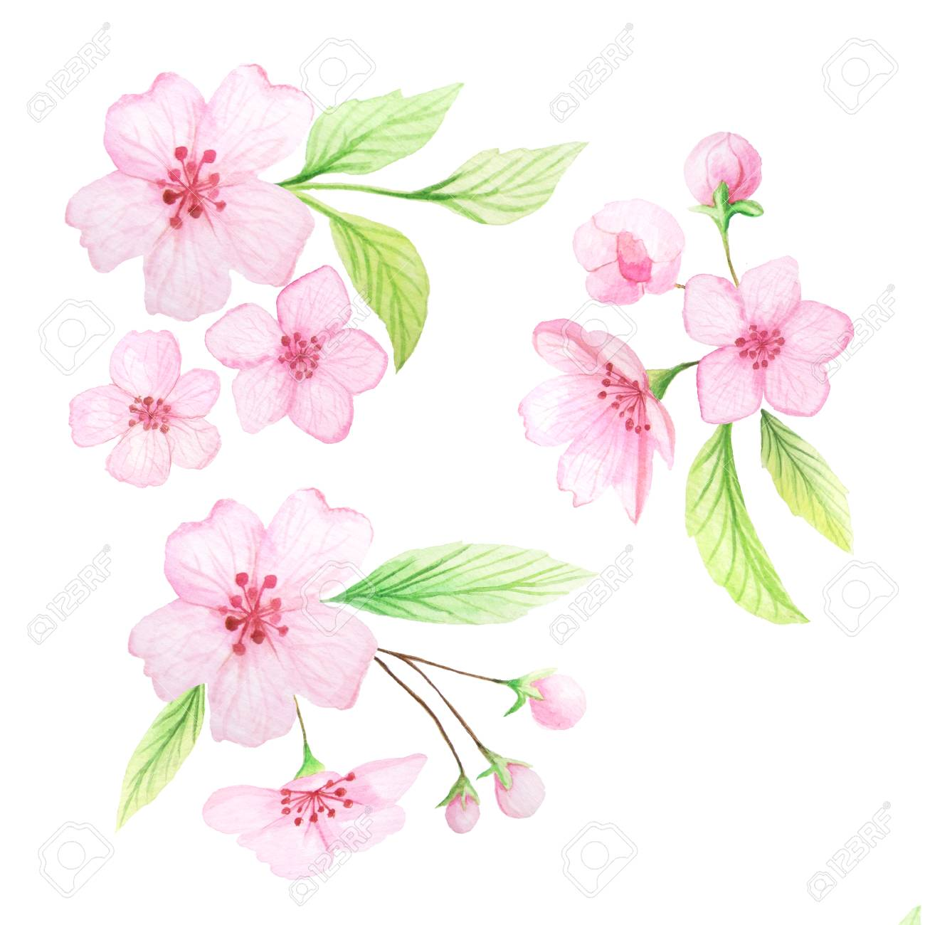 Set Of Hand Painted Watercolor Cherry Flowers And Leaves Spring