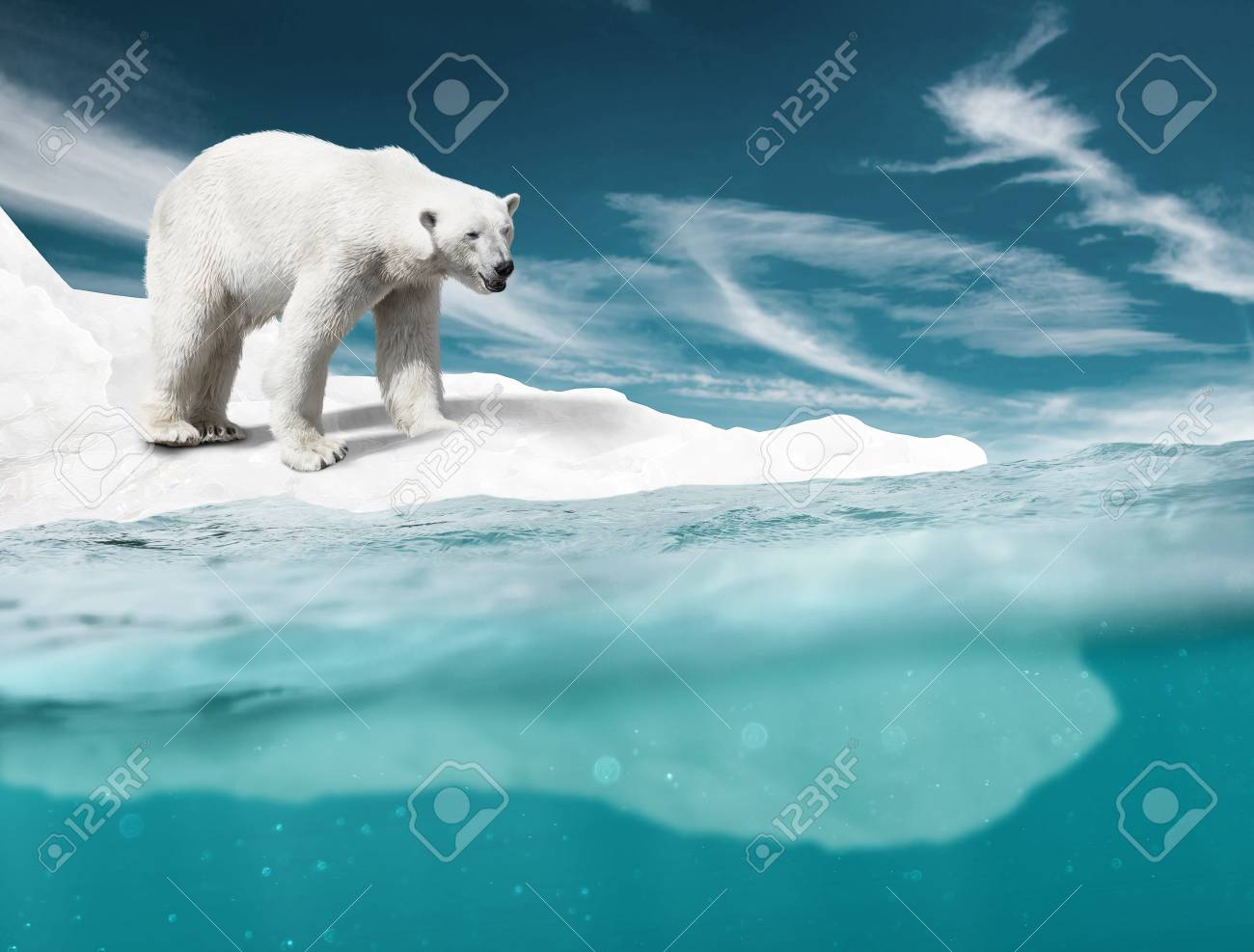 Polar Bear - 75225986